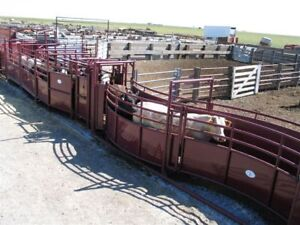 Superior Handling - Full Line Stampede Cattle Handling Systems