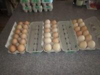 **Farm Fresh Free Run Brown Eggs**