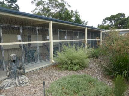 Cat Boarding - Canning Vale