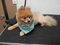 Professional Mobile Dog And Cat Grooming 25+Yrs. Exp!!