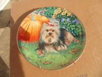 Danbury Mint Yorkshire Terrier Collectors Plate (Harvest Pup) in as New Condition = 1 of 8.