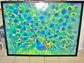 Very Large And Impressive Glazed Picture Print Of A Peacock In wood Lacquered Frame.