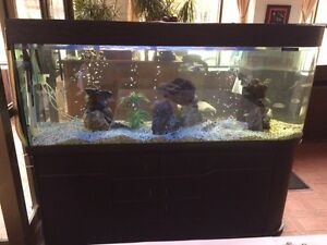 aquarium maison int rieur dans ville de montr al petites annonces class es de kijiji. Black Bedroom Furniture Sets. Home Design Ideas
