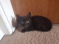 Playful Little Kitten