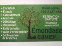 Service d'arbre professionnel Rive-Sud et environs