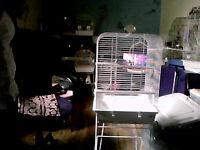 grosse cage blanc pour cockatiel ou perruche avec accessoires