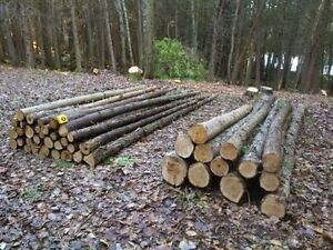Cedar for sale - saw logs, rails and posts