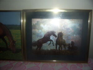 horse pictures