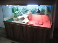 vivarium and stand with bearded dragon