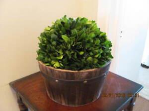 grosse boule de plante dans baril