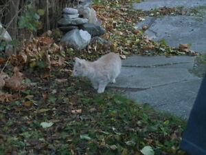 Free Kitties!! London Ontario image 4
