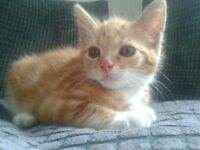ginger male looking for a happy ending!!!