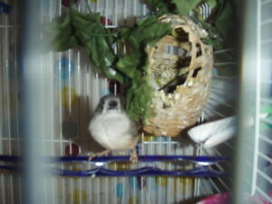 Finches For Five Dollars