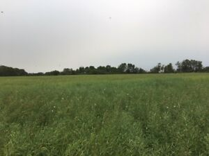 Farmland for sale in RM of Birch Hills