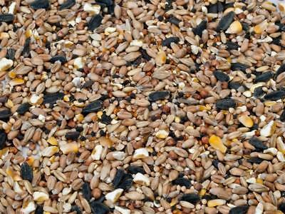 Wild Bird Seed Feed Mix 1kg pack, Year Round Feeding   Fast FREE Shipping,