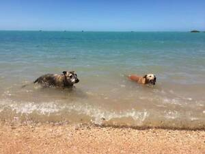 House sitter wanted Broome Broome City Preview