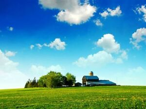 Workable Farm Land- Cash Rent or Share Crop