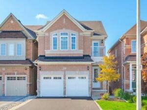 Walkout basement apartment near Square 1 for lease