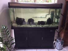 4 ft Sun Sun Aquarium on timber stand and cupboard Redland Bay Redland Area Preview