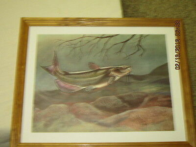 catfish   fishing picture framed collectible
