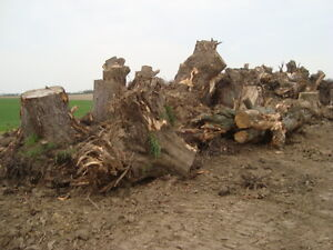 Stump Grinding - Wood and Construction Waste Removal Stratford Kitchener Area image 5