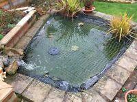 free pond fish and pump