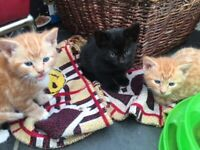 SOLD Beautiful red, black and white kittens