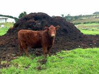 cow manure fertilizer