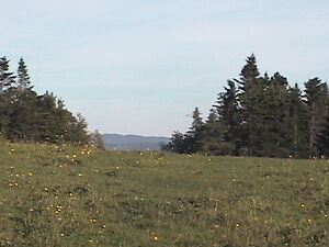 25 acres land in MEADOWS BAY OF ISLANDS AREA
