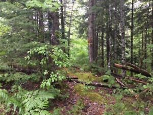 Vacant Land in Nine Mile River!