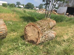 Troncs d'arbre - À donner