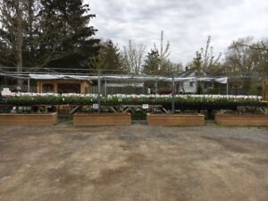 Perennials for sale. Over 100 varieties.