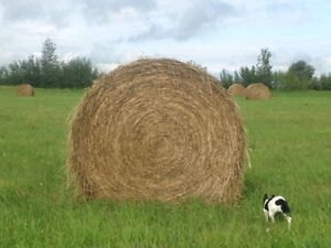 1500 lb Bales Timothy mixed grasses
