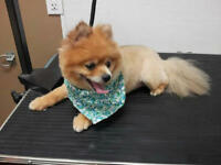 Shannon's Mobile Dog And Cat Grooming 25+ Yrs. Exp!