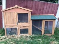 Male Guinea pig with large hutch