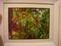 Stirling Nature Photographs Great Art For Your Wall