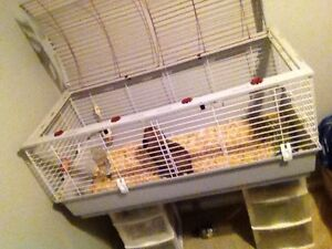 Rabbit Cage SOLD PPU