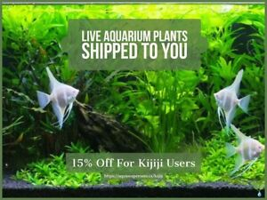 Order Live Aquarium Plants, Hardscape & More!