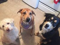 Professional and Reliable Pet Care/ Dog Walking Services