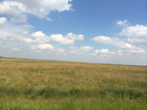 Hay Land in Saskatchewan for Cattle and Goats