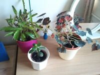 SEVEN FREE HOUSEPLANTS!!! plus small plant stand NOW REDUCED 4 quick sale