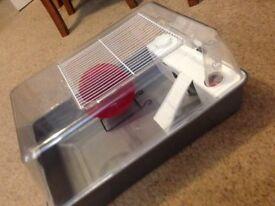 Dwarf Hamster - full setup