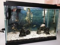 20 gallon fish tank, LED light, timer and accessories