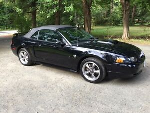 2004 Ford Mustang 40th Anniversary Coupe (2 door)