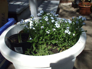 Spring perrenial plants $5 and up