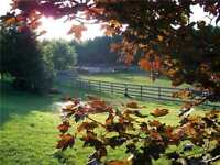 Equestrian Dressage | Facility  and Guest House for RENT