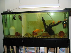 Aquariums 230 gallon w/Very Solid Stand, also 90, 35, 20gal