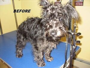 Learn about Dog Grooming