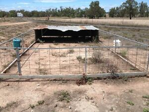 Livestock Pens Ashford Inverell Area Preview