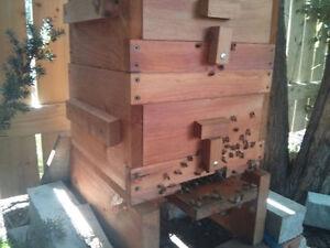 Warre Beehives Kingston Kingston Area image 5